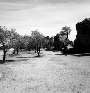Olive Grove with Ruins